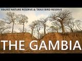 THE GAMBIA ABUKO NATURE RESERVE TANJI BIRD 2018