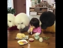 В мире животных - Делюсь завтраком со своими лучшими друзьями...