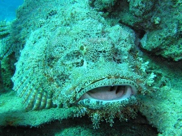 Самая ядовитая рыба, изображение №1