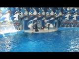 SAM_4874 сочинский дельфинарий часть 1