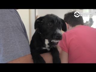 Приюты для животных в Чехии