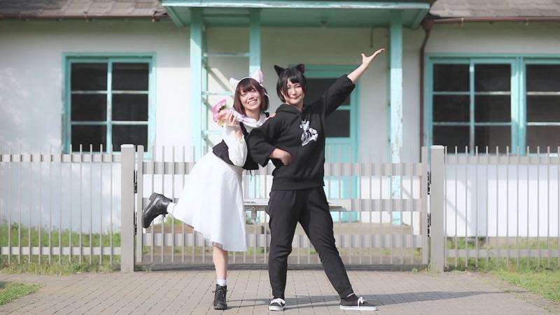 ちぃ汰×きりり 嗚呼、素晴らしきニャン生 踊ってみた miho**×てお sm33214781