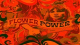 60'S Psychedelic Flower Power Video Collection