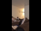 Cat gets confused by What the fluff