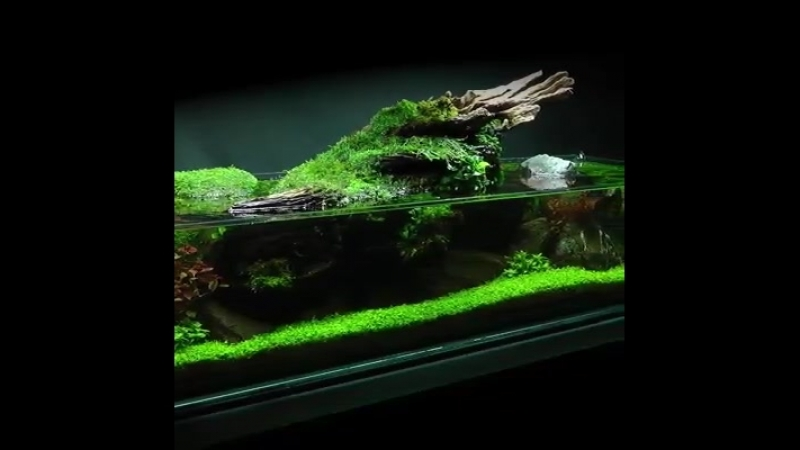 Простота aquascape Джеймса Финдли Полное видео скоро будет опубликовано! Вот предварительный просмотр