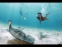 NEMO by BLU3 is a compact dive system that supports one diver up to ten feet