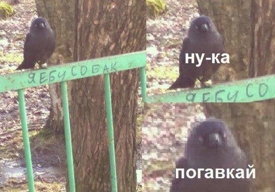 VRUBdSI4yrs.jpg
