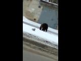 Медведь на прогулке в Белгороде, Бульвар Юности