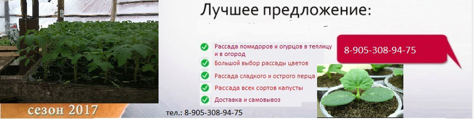 Реклама рассады цветов 47