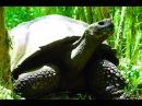 Секс больших черепах Горячо и весело