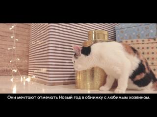 Трогательная новогодняя социальная реклама про пермских бездомных животных