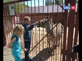 «Молодогвардейцы» организовали для маленьких ельчан поездку в Липецкий зоопарк