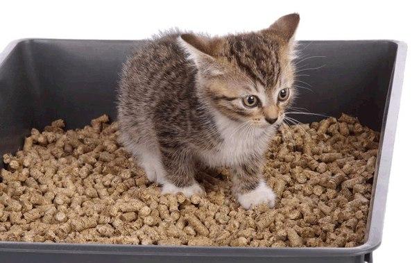 Kittens not using litter box