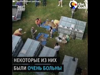 Спасение животных из худшего зоопарка