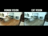 Как животные видят внешний мир в сравнении с людьми #FYB