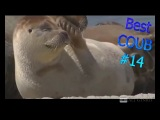 Best COUB moments #14 2018 funny compliation video