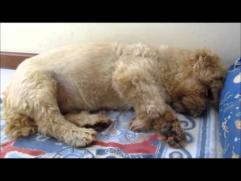 Cão,entre em depressão após a morte de uma cachorrinha companheira dele!