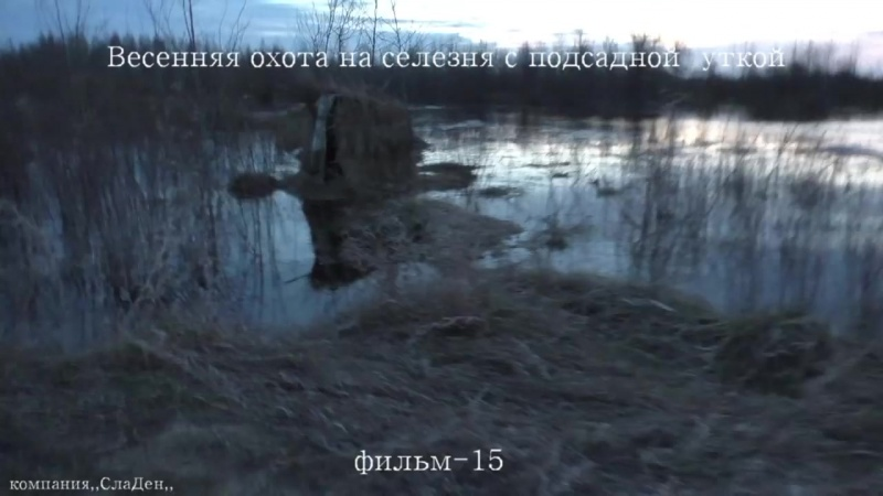 Весенняя охота на селезня с подсадной уткой.15