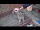 Кот разговаривает с хозяином. Очень смешно!