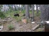 Охотничий котэ (VHS Video)