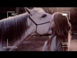 Equestrian sport - Alle Farben  Bad Ideas