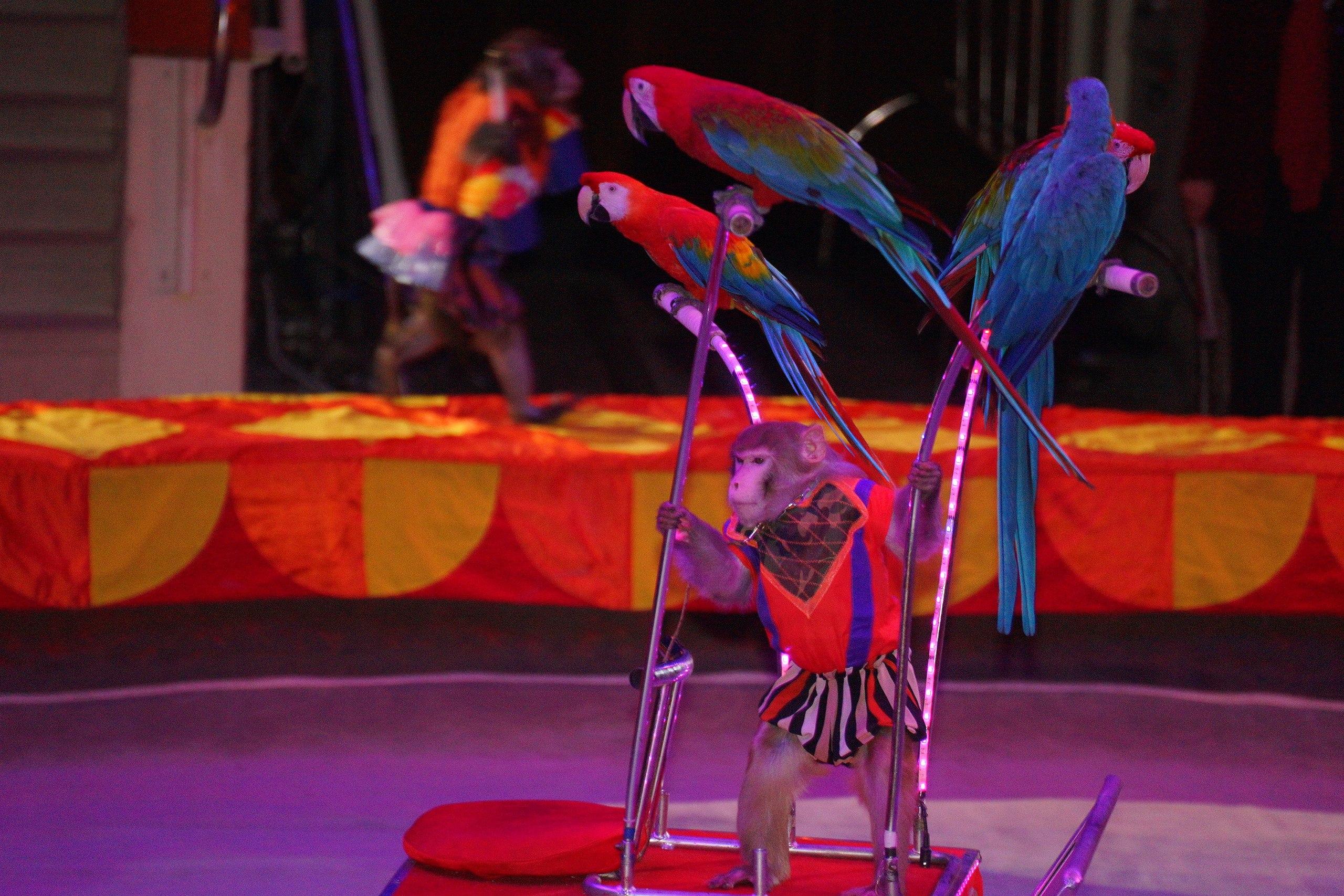 страны картинки артисты цирка животные печать пищевом