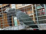 попугай читает намаз.mp4