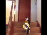 Как Реал Мадрид следит за трансферами  Барселоны