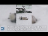 Что может быть веселее катания на свежем снегу?