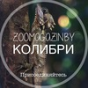 Zoomagazin.by - зоотовары для ваших питомцев.