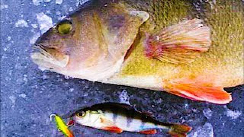 ПОЛОСАТЫЕ РАЗРЫВАЮТ БАЛАНСИР Зимняя рыбалка 2018. Раздача, Ловля крупного окуня на Балансир.
