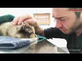 Мужчина прощается со своей умирающей кошкой,  с которой он прожил 13 лет.