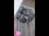 Друзья коты - Кузя и Марсель