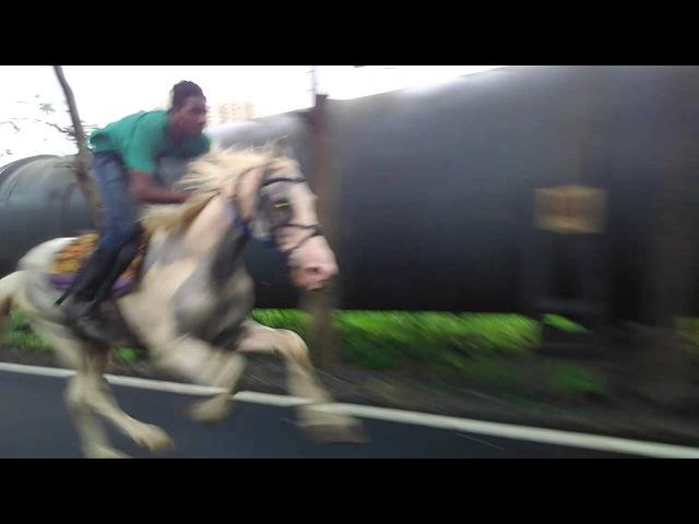 Horse riding Wajid naik