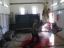 Забой коровы . Cow slaughter .  БЕДНАЯ  КОРОВКА , КАКИЕ  ЖЕСТОКИЕ  ЛЮДИ !!!!