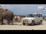 Слон-эвакуатор