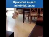 Собака прыгает на диван