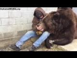 Американец, обнимающий грустного медведя, стал сенсацией в Сети