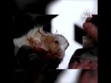 В Волгограде спасатели вернули к жизни пострадавшего при пожаре кота [NR]