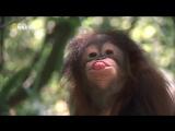 «Самые странные в мире: Животные-хулиганы» (Документальный, природа, животные, 2012)