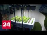 Сити-фермерство: почему выращивать салат и помидоры у себя на кухне стало модно