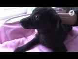 Собака по кличке Нюша ищет новый дом / Утренний эфир