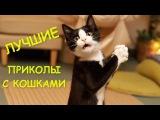 Приколы с котами и кошками Подборка смешных видео с животными THE BEST CAT VIDEOS Funny C...