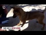 Трансформация пса, который чуть не умер от голода