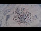 217 парашютистов создали потрясающую формацию в воздухе