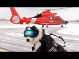 Aviation's Coolest working Dog Tribute to K9 Piper