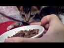 Котенка разбудили запахом еды