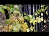 Хелависа - Листья под дождём. Автор монтажа ролика Галина Смирнова.