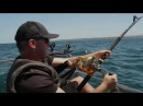 CHASING MONSTERS South Africa's Finest and Fiercest Shark and Yellowfin Tuna