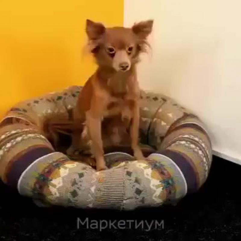 Как из ненужного свитера изготовить подушку для собаки.